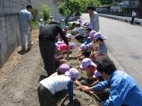 農業体験でトウモロコシを植え付け!(善防支店)